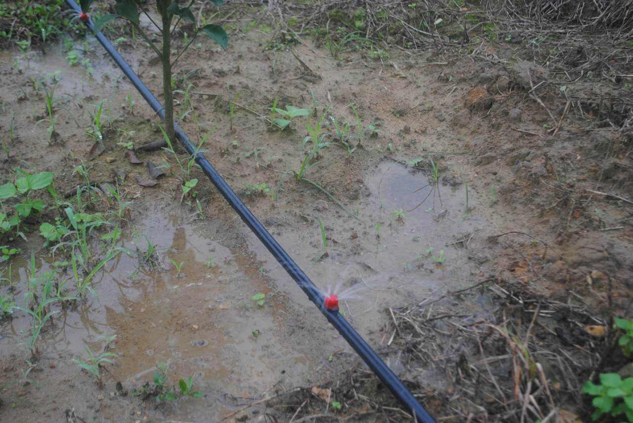 果树滴灌小管出流
